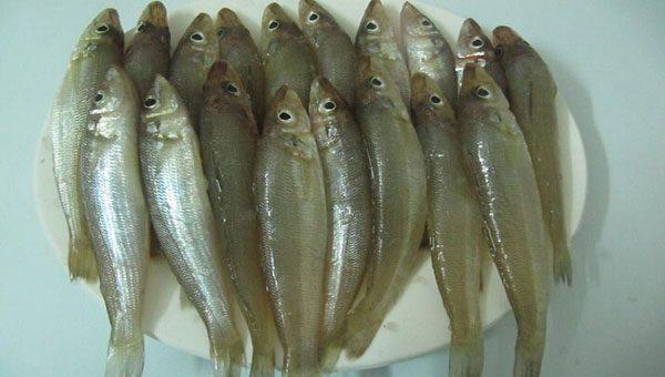 Cá bống các bạn lựa những con còn tươi và đồng đều nhau