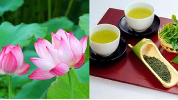 Mẹo giảm cân bằng trà xanh và lá sen